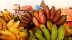 I które tu banany wybrać? foto: Ela