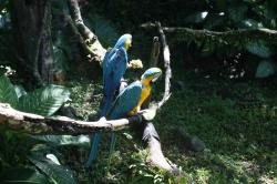 """Później udaliśmy się do """"ZOO de Guadeloupe"""" - choć bardziej jest to park botaniczni, niż zoo foto: Piotr"""