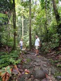 Wycieczka po lesie deszczowym - Gwadelupa foto: Kasia