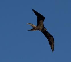 Jeszcze jeden ptaszek na naszej stronie,foto: Ela