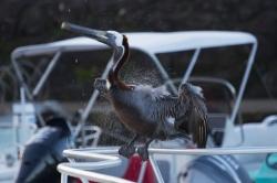 Jeszcze kilka fotek ptaków foto: Kasia