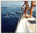 Delfiny foto: Peter