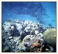 Podwodne krajobrazy foto: Peter