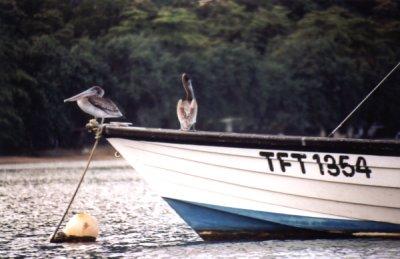 Ptaki foto: Peter